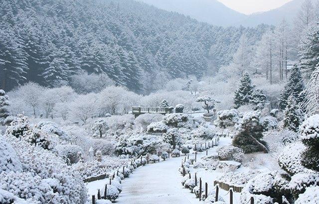晨靜樹木園:冬季