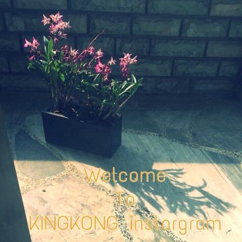 KINGKONG Ent. 官方IG启用