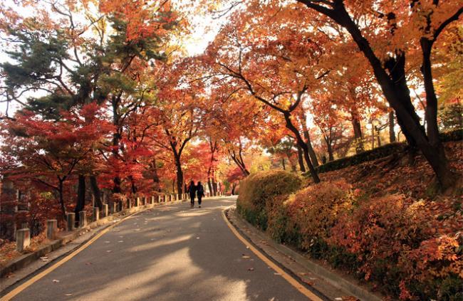 《什麼時候去韓國最好玩?》秋天