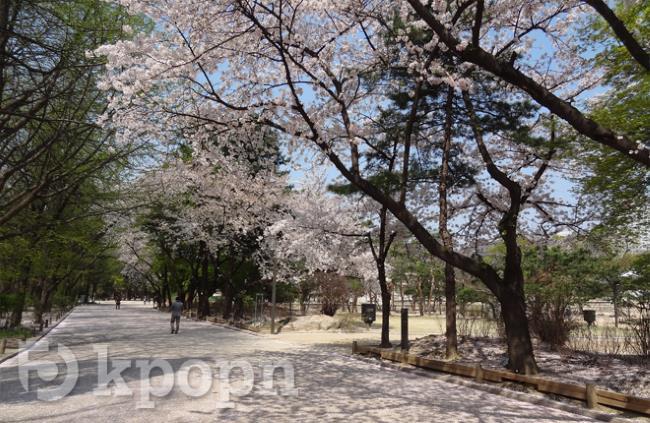 《什麼時候去韓國最好玩?》春天
