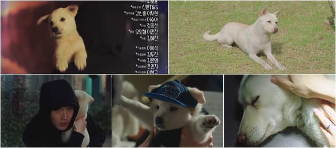 《宇宙之星》狗狗